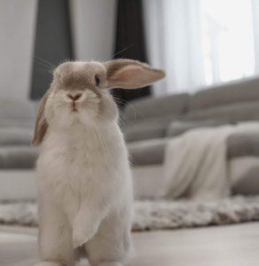 dtr bunny blog torpenyul vasarlas
