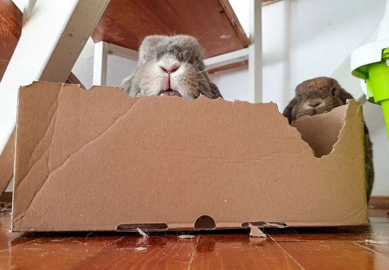 nyuszi gondozása doboz rágás