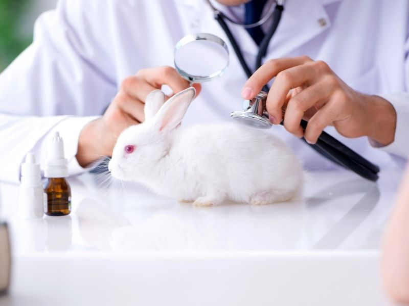 Kép erről DTR bunny A nyuszik apolasa karomvagastol az ivartalanitasig 1 2