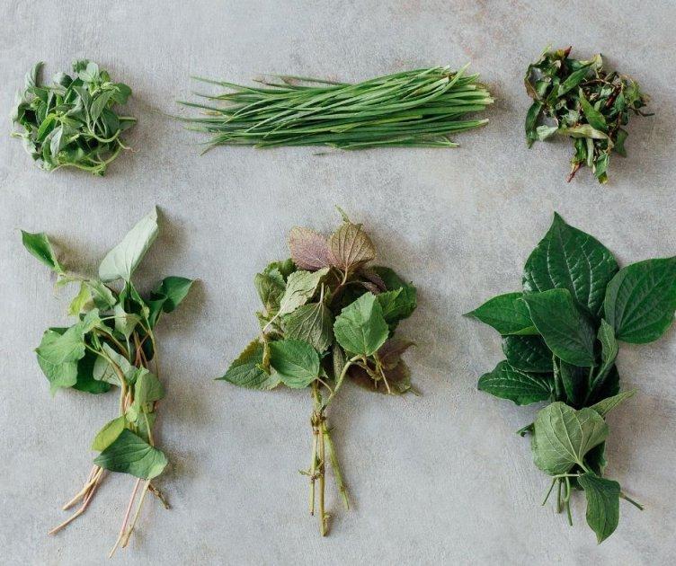 Növény kisokos nyuszik számára – kerti gazoktól a gyógynövényekig